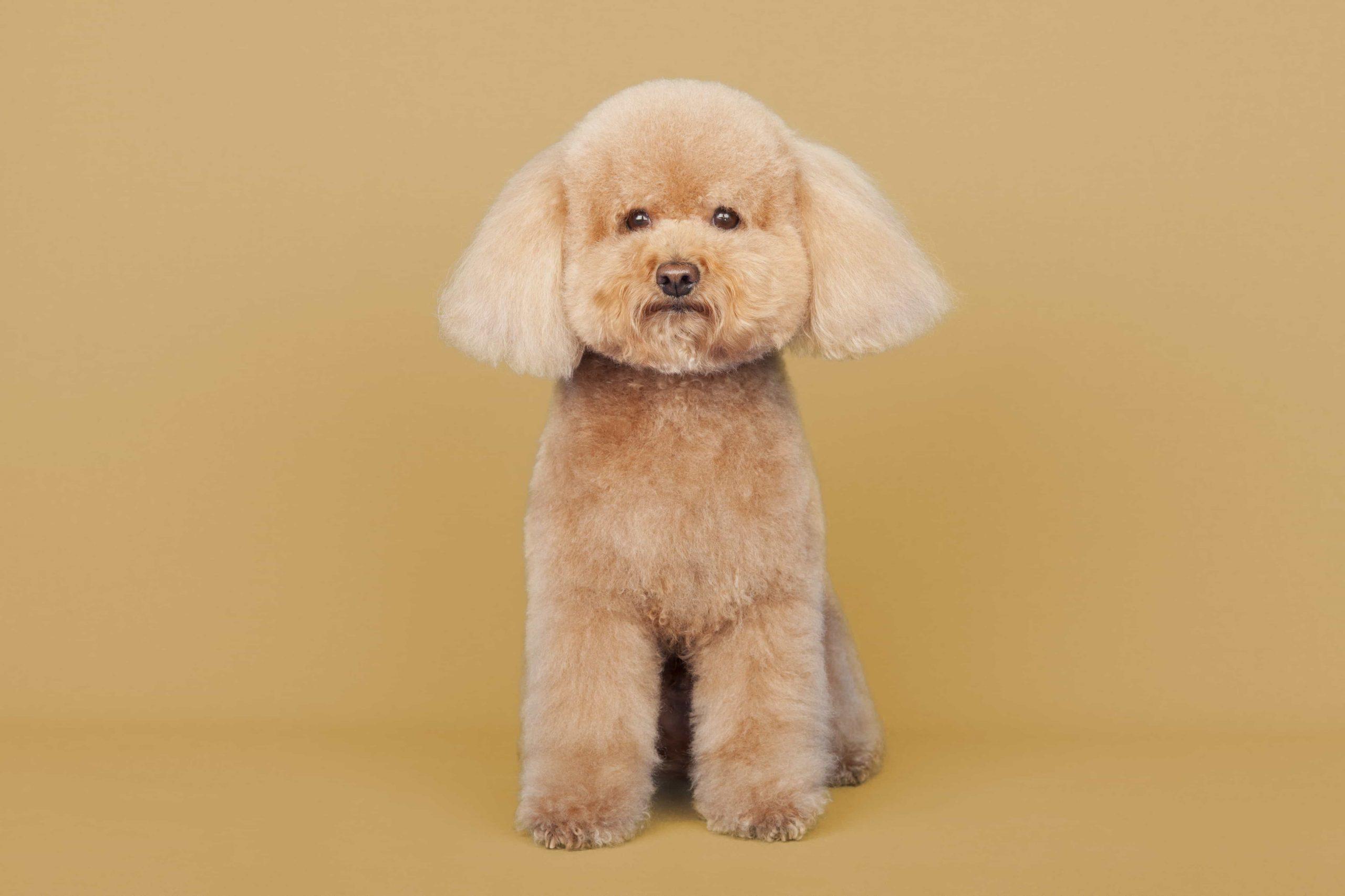 peluqueria canina arguelles
