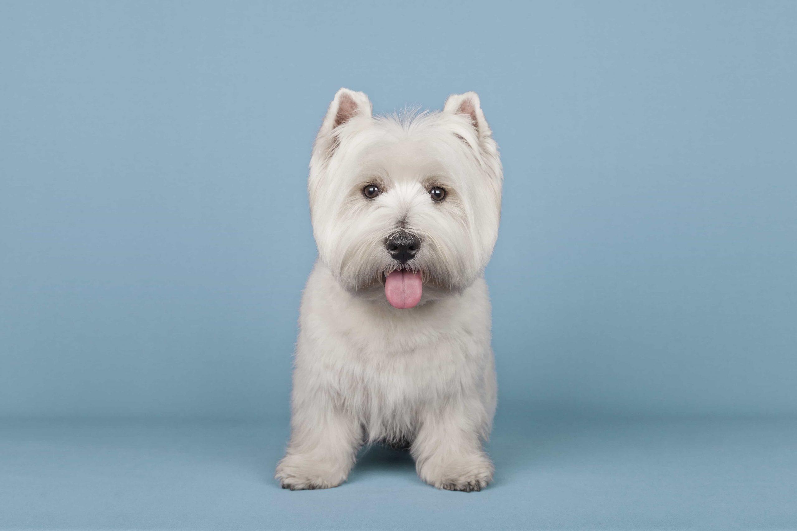 peluqueria para perros corte