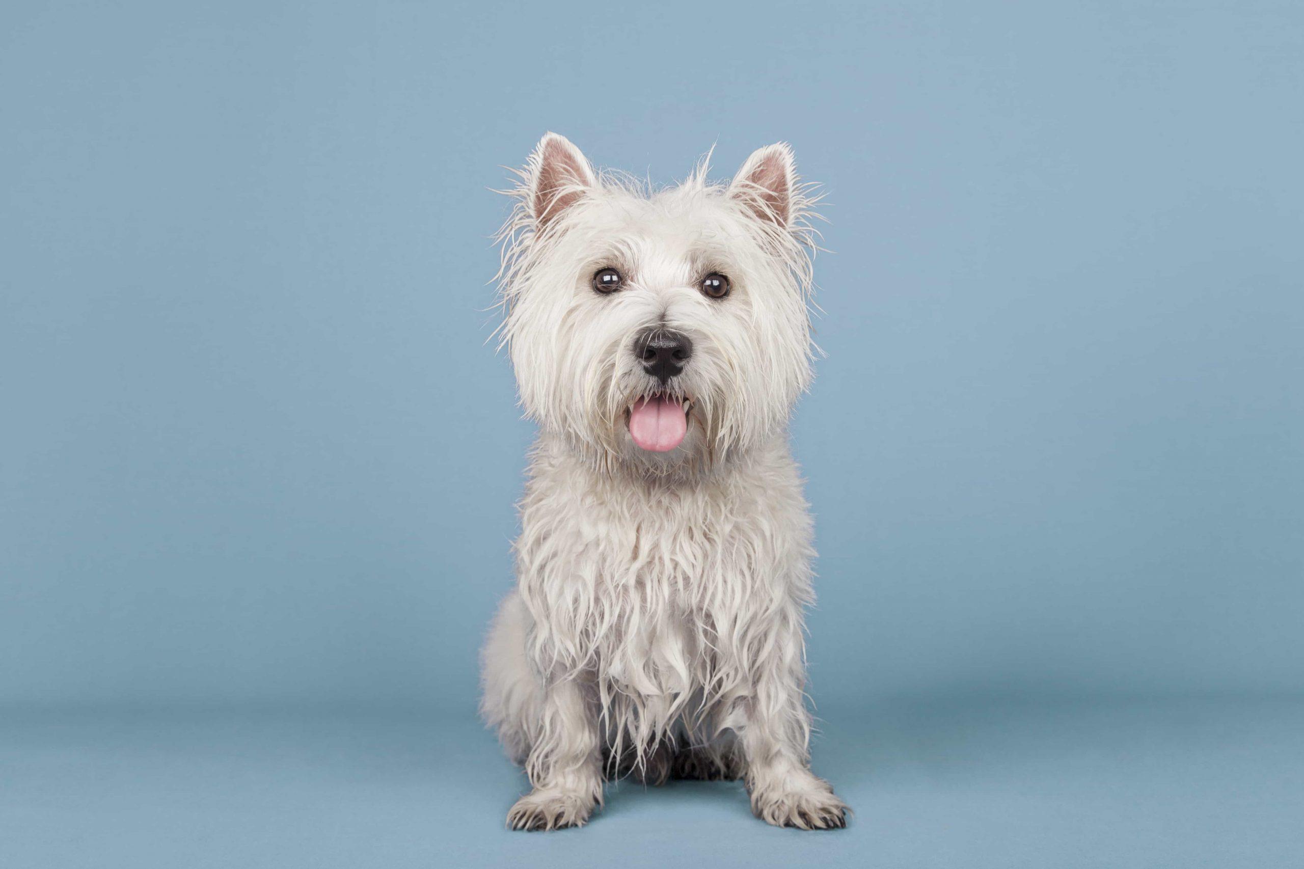 peluqueria canina baño y corte