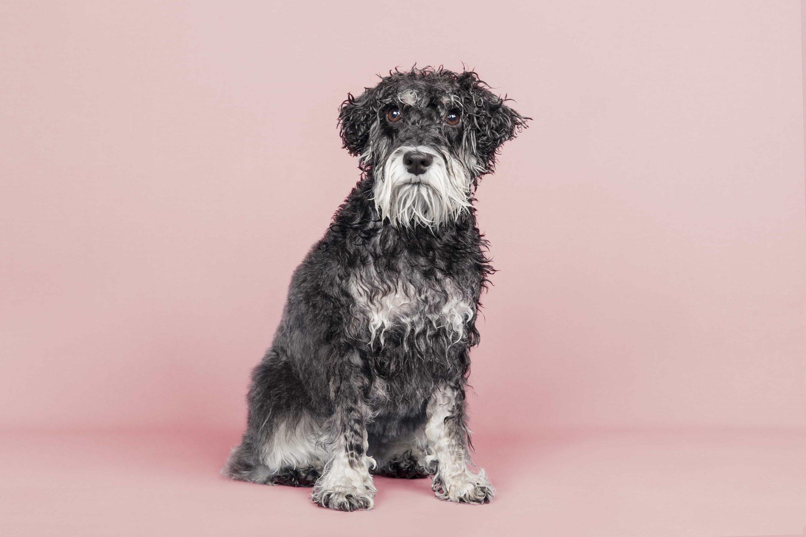 peluqueria canina corte perros de raza