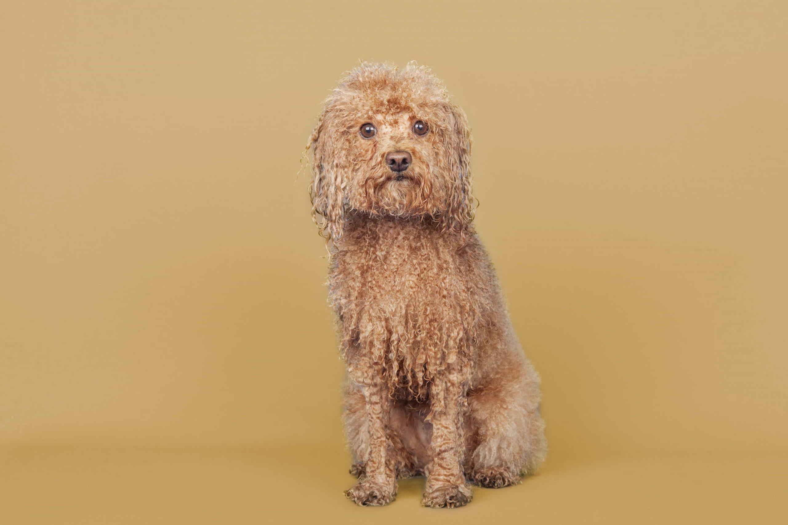 peluqueria canina moncloa