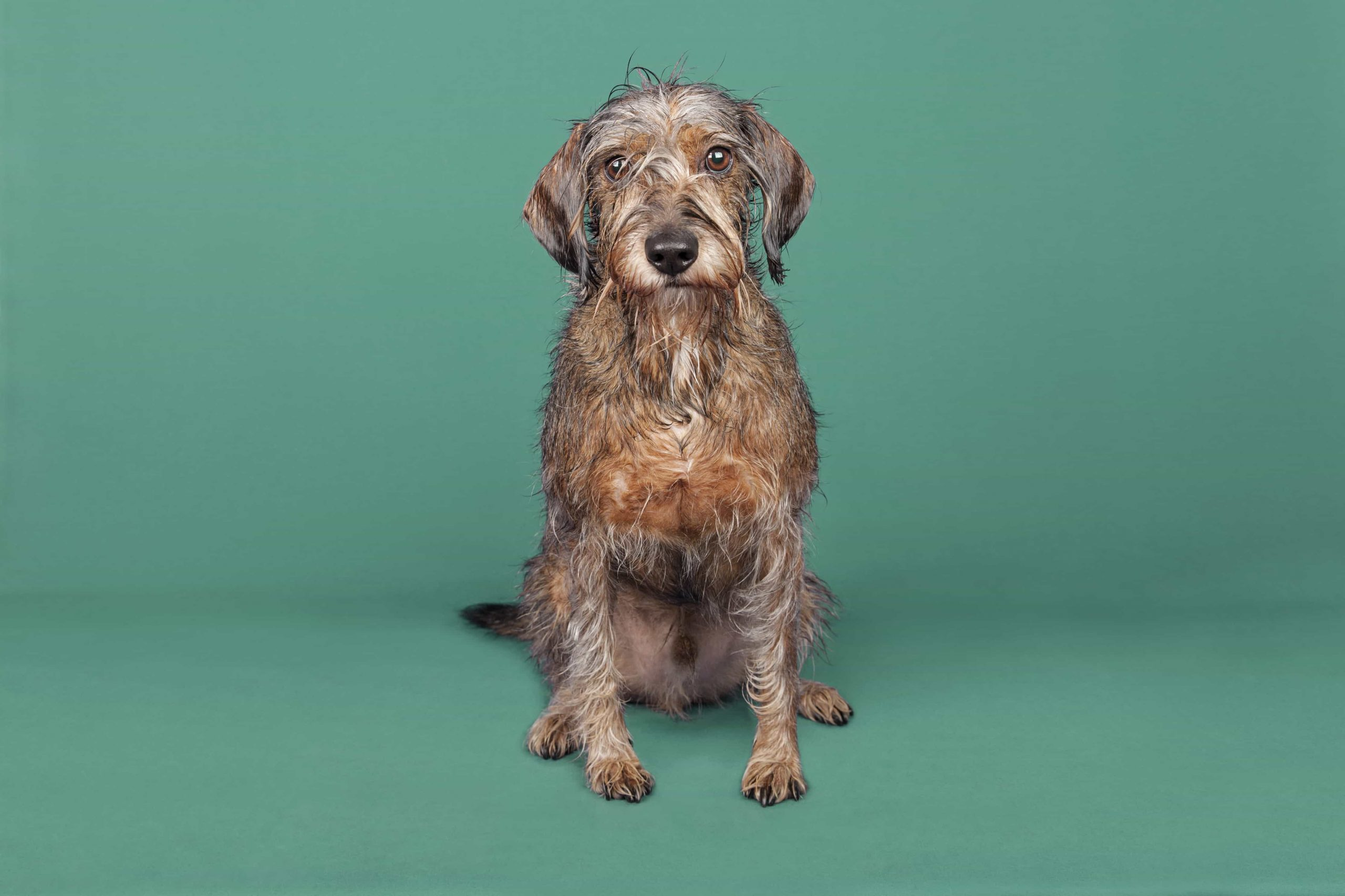 peluqueria baño perros madrid