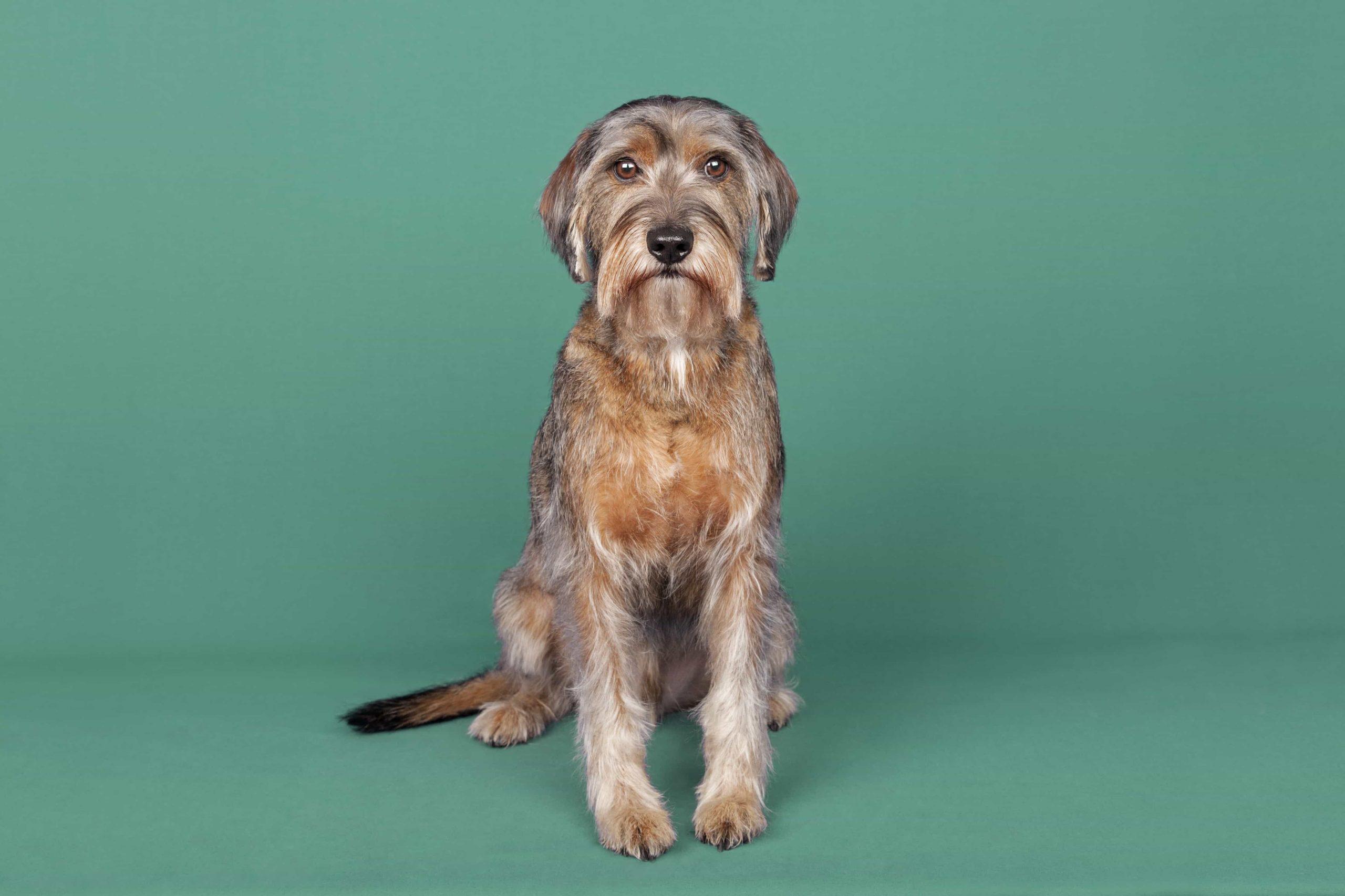 peluqueria canina baño perros mestizos